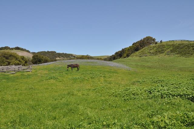 Property for sale at 0 Calle De Robles, Carmel Valley,  California 93924