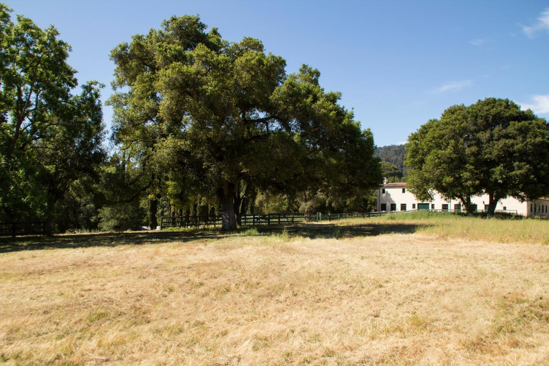 80 Roberta Drive Woodside, CA 94062 - MLS #: ML81693924