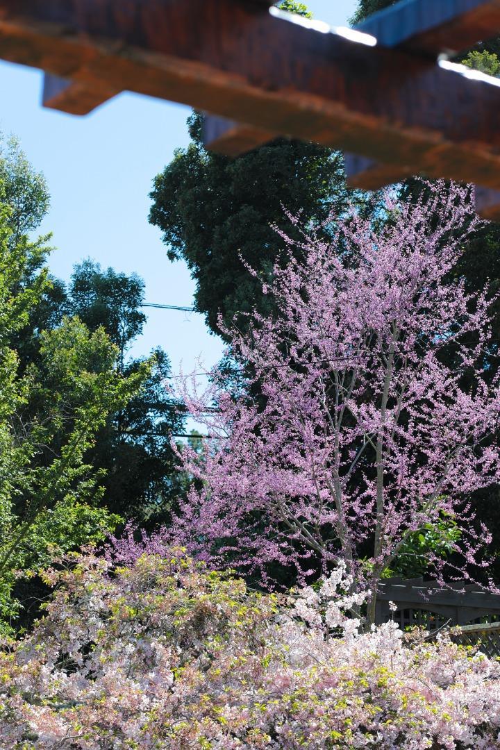 627 W POPLAR AVE, SAN MATEO, CA 94402  Photo