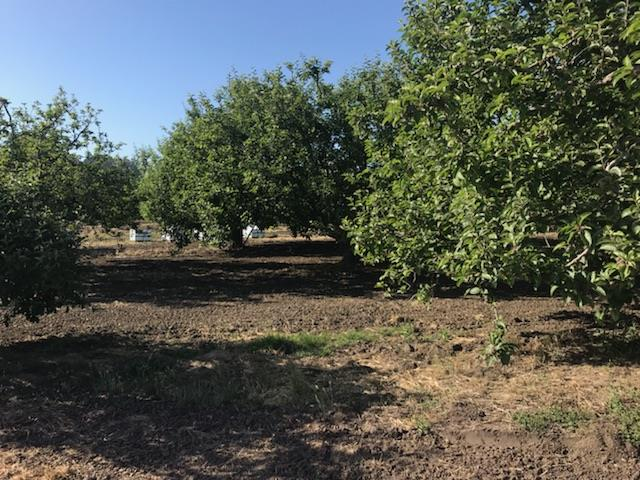 Detail Gallery Image 1 of 5 For 0 Merk Rd, Corralitos, CA 95076 - – Beds | – Baths
