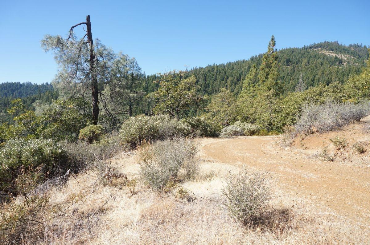 Detail Gallery Image 1 of 23 For 1130 Black Bear Rd, Weaverville, CA 96093 - – Beds | – Baths
