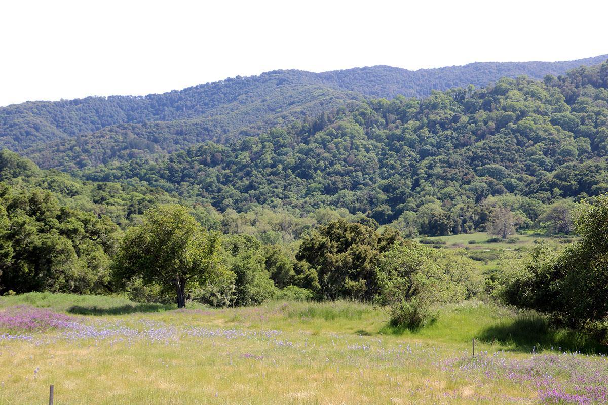 40 Pronghorn Run Carmel, CA 93923