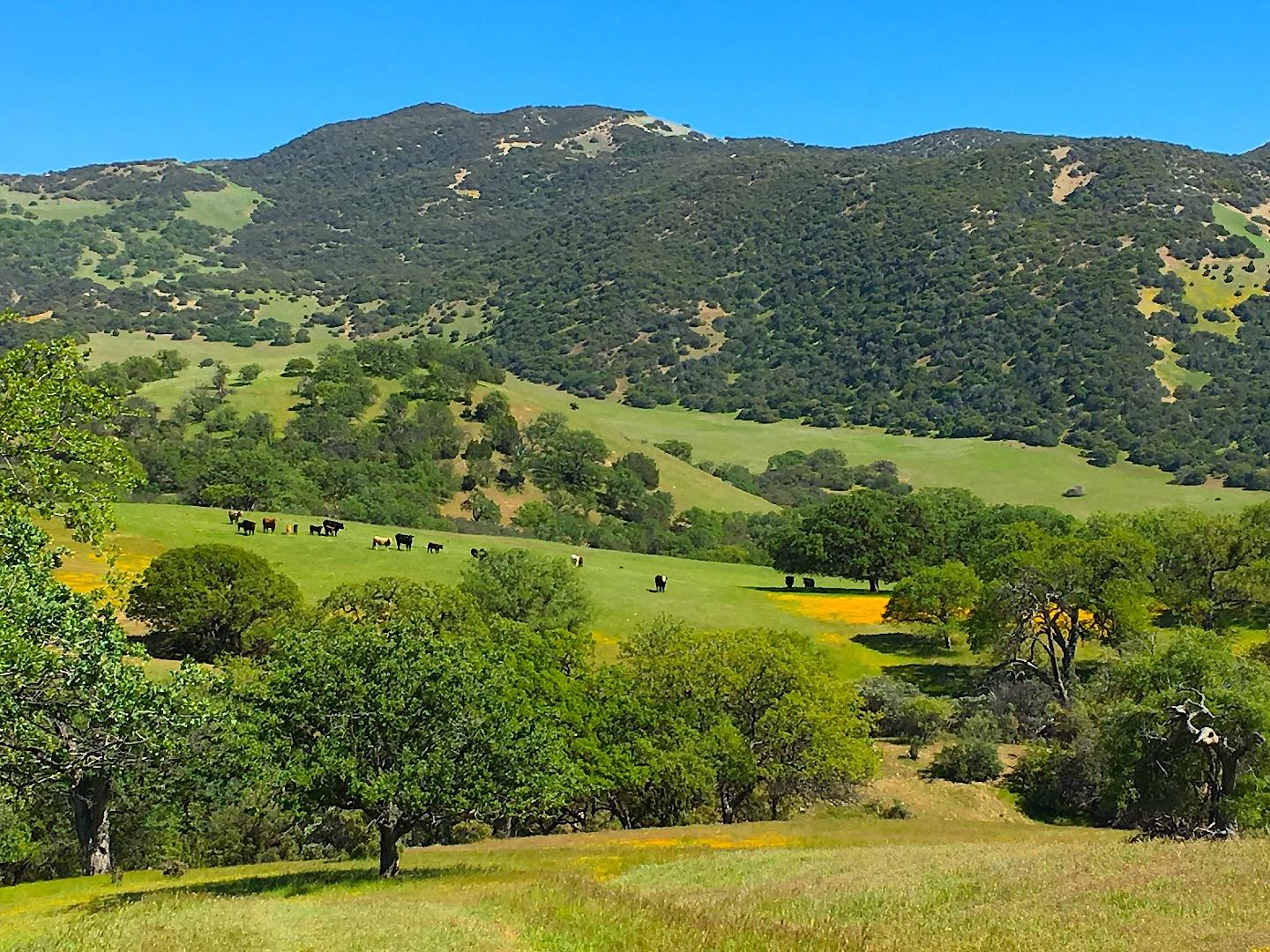 Detail Gallery Image 1 of 26 For 00000 Carmel Valley Rd, Greenfield, CA 93927 - – Beds   – Baths