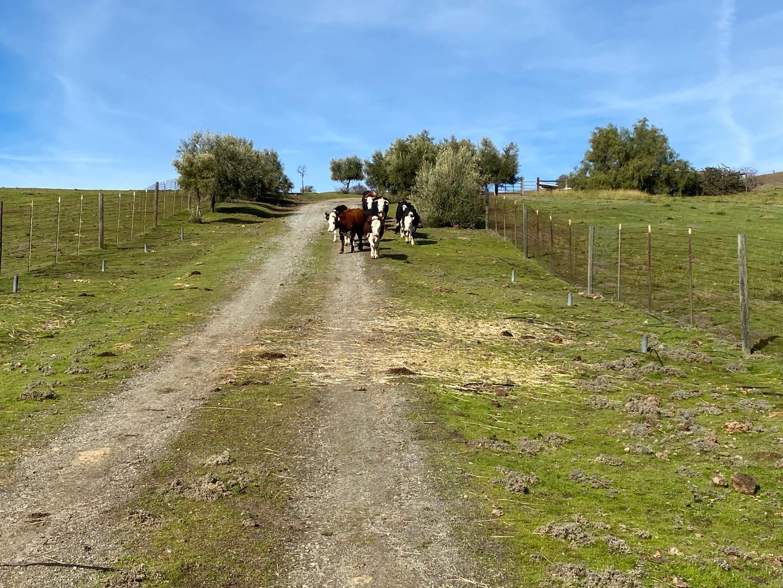 19967 Panoche Road Paicines, CA 95043